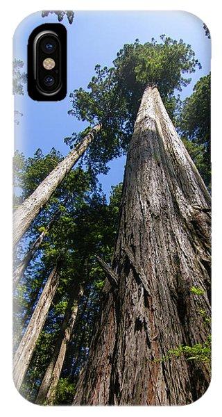Towering Redwoods IPhone Case