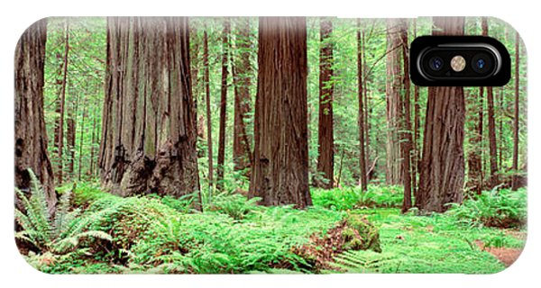 Wood Floor iPhone Case - Trail, Avenue Of The Giants, Founders by Panoramic Images
