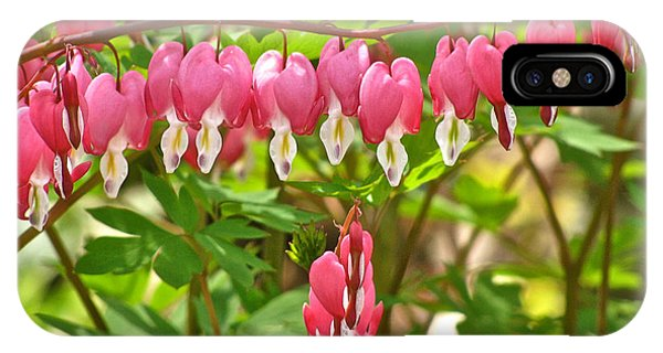 Trail Of Bleeding Hearts IPhone Case