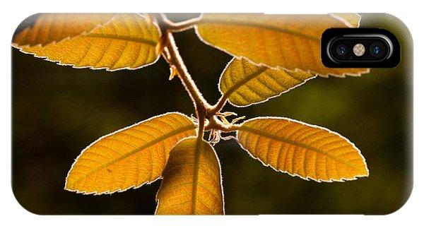 Translucent Leaves IPhone Case