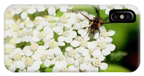 Transverse Flower Fly IPhone Case