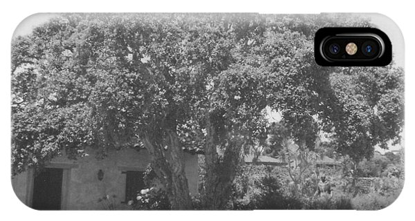Tree At Carmel Mission IPhone Case
