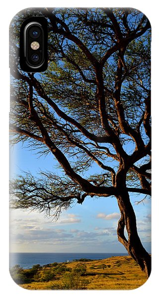 Tree At Lapakahi State Historical Park IPhone Case