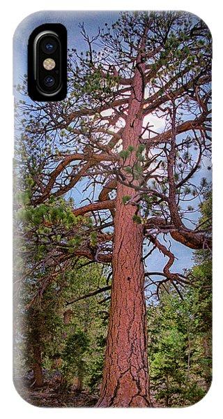 Tree Cali IPhone Case