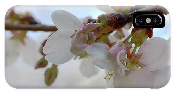 Dogwood Branch Pink IPhone Case