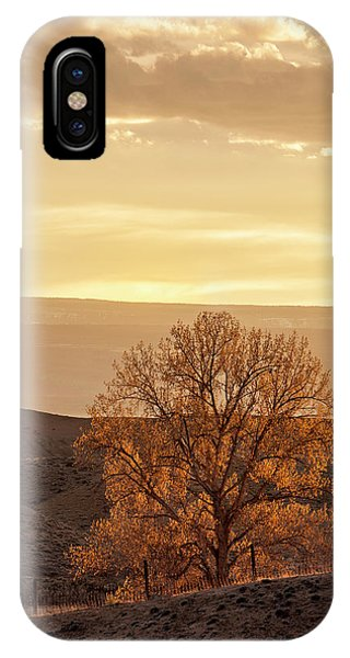 IPhone Case featuring the photograph Tree In Desert At Sunset by Denise Bush