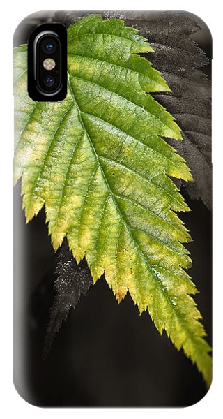 Tree Leaf Study  IPhone Case