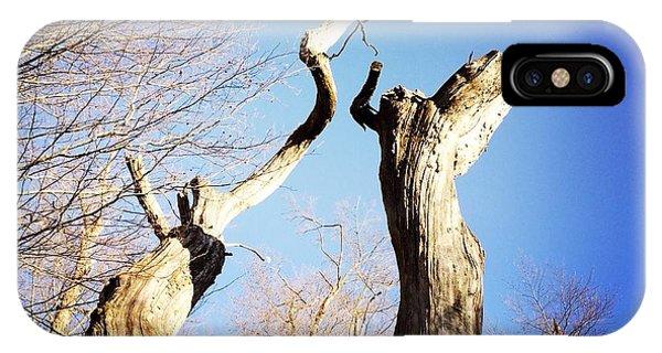 Tree iPhone Case - Tree by Matthias Hauser