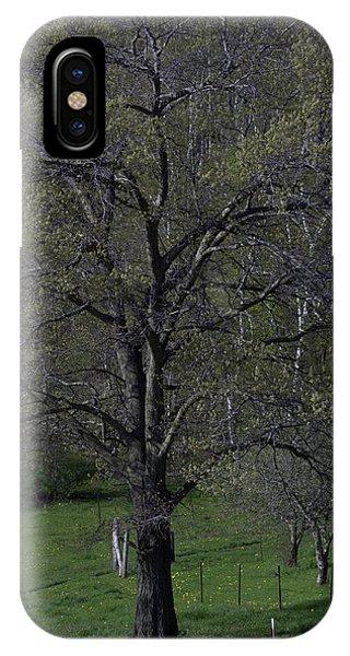 Tree IPhone Case