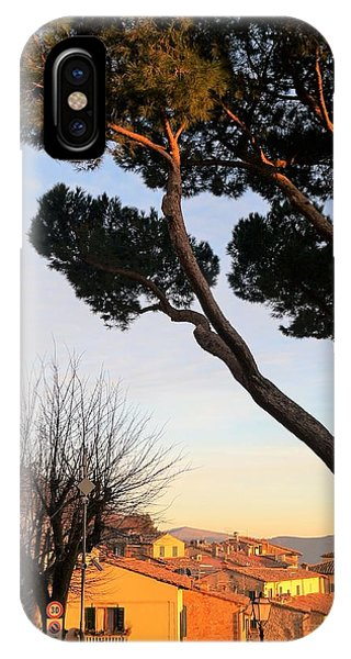 Umbrella Pine iPhone Case - One Tree Over Tuscany by Andrea Rea