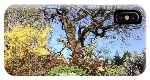 Tree Photo 991 IPhone Case