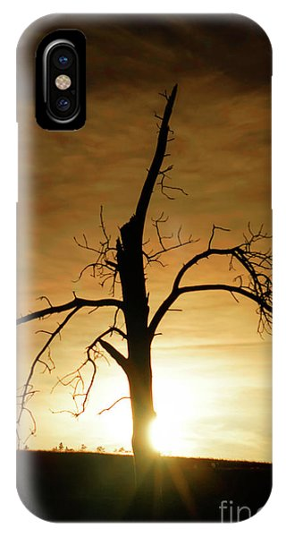 Tree Silhouette At Sundown IPhone Case