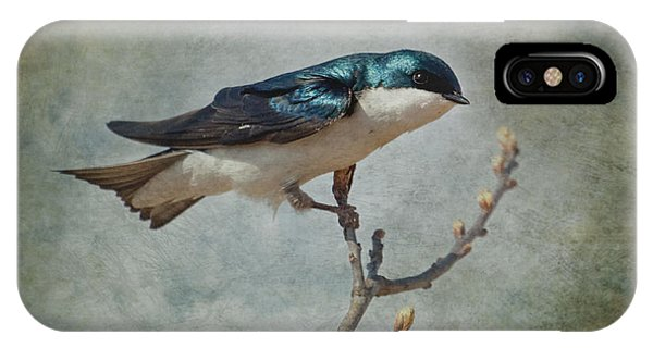 Tree Swallow IPhone Case