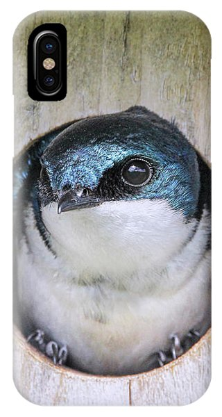 IPhone Case featuring the photograph Tree Swallow In Nest Box by Jennie Marie Schell