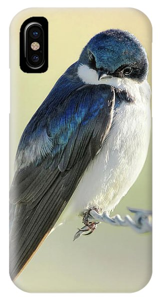 IPhone Case featuring the photograph Tree Swallow by Jennie Marie Schell