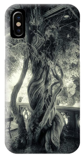 Tree Trunk Bw Series Y6693 IPhone Case