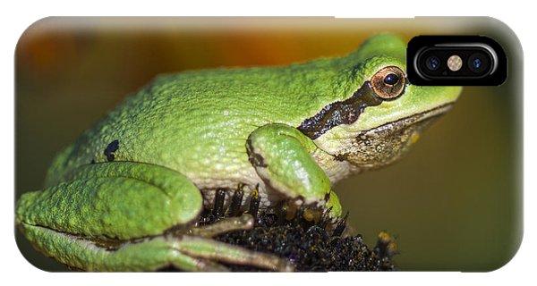 Treefrog On Rudbeckia IPhone Case