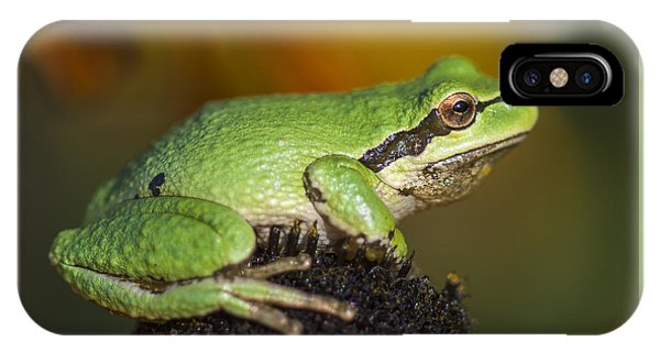 Treefrog On Rudbeckia IPhone Case