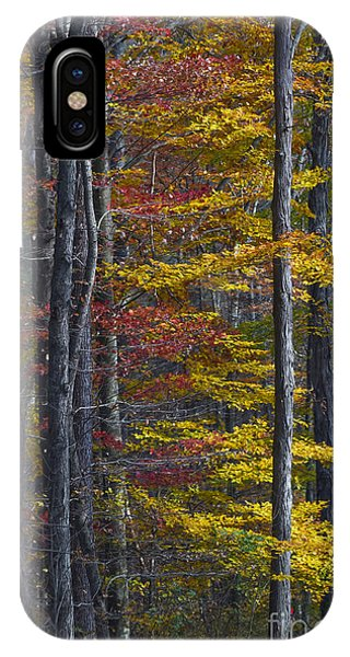 Trees With Autumn Colors 8260c IPhone Case