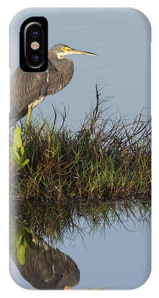 Tri-colored Heron And Reflection IPhone Case