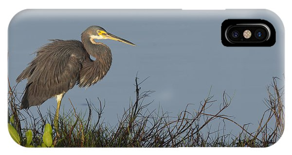 Tri-colored Heron In The Morning Light IPhone Case