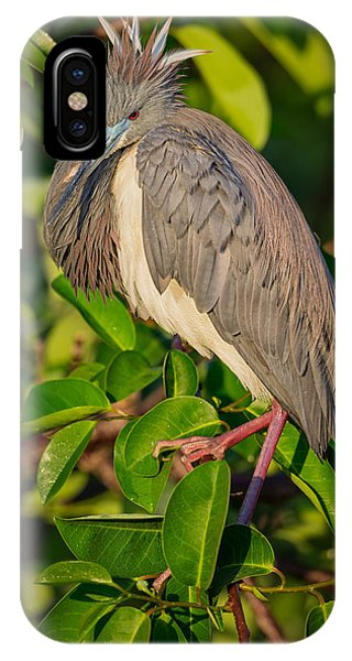 Heron iPhone Case - Tricolored At The Venice Rookery by Andres Leon