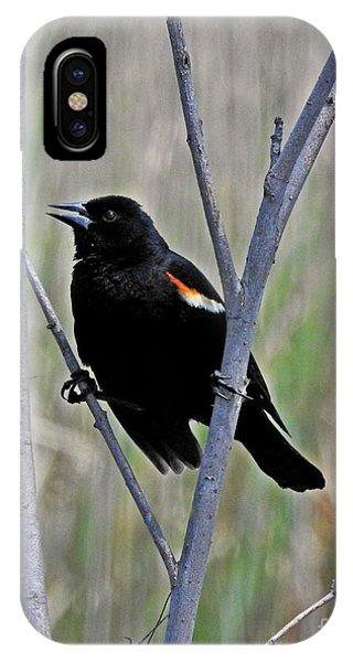 Tricolored Blackbird IPhone Case