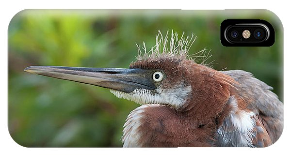 Tricolored Heron - Bad Hair Day IPhone Case