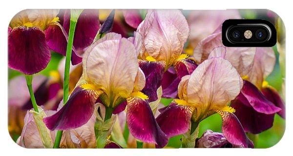 Tricolored Irisses IPhone Case