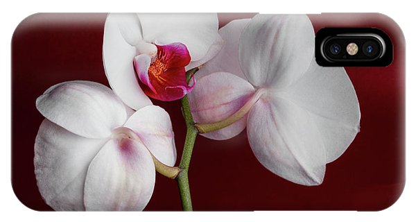 Orchid iPhone Case - Trio Of Orchids by Tom Mc Nemar