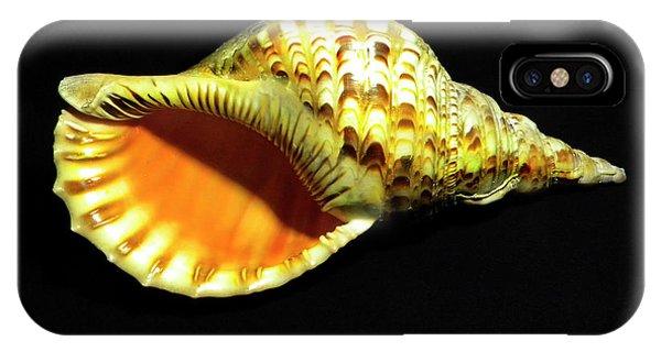 Triton Trumpet Seashell Cymatium Tritonis IPhone Case