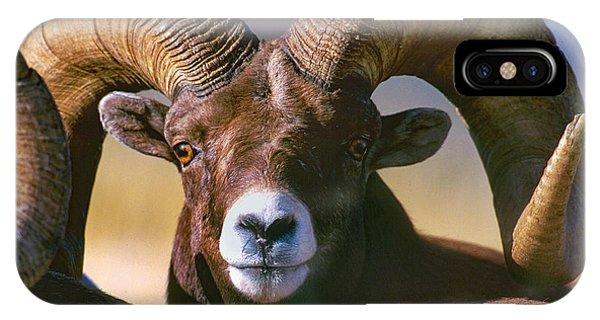Trophy Bighorn Ram IPhone Case