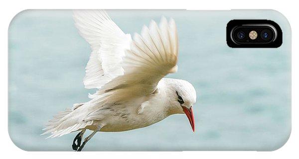 Tropic Bird 4 IPhone Case