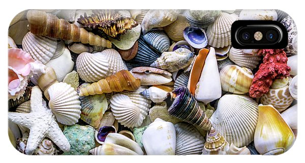 Tropical Beach Seashell Treasures 1500a IPhone Case