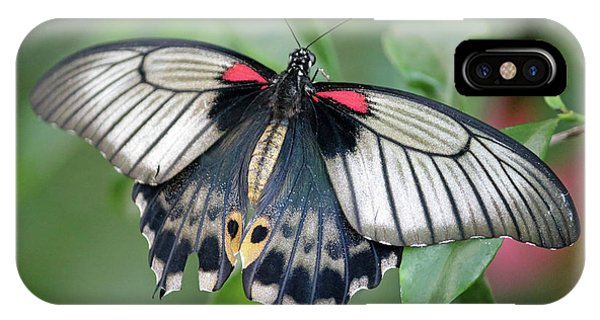 Tropical Butterfly IPhone Case