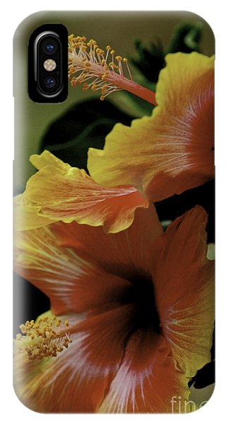 Tropical Punch IPhone Case