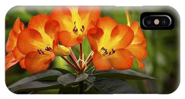 Tropical Rhododendron IPhone Case