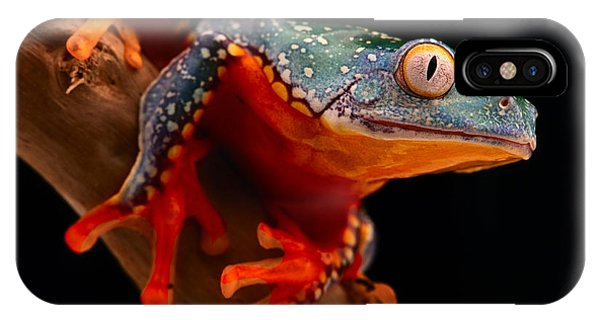 tropical tree frog Cruziohyla craspedotus IPhone Case