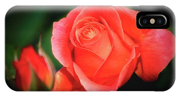 Tropicana Rose IPhone Case