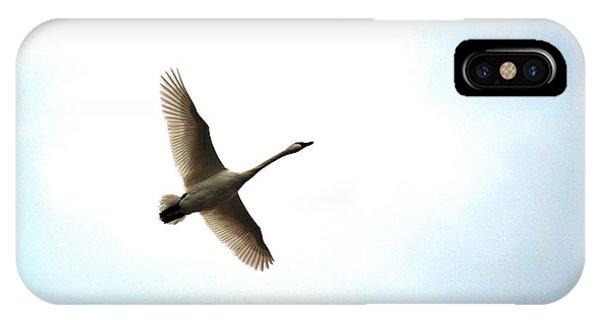 Trumpeter Swan In Flight IPhone Case