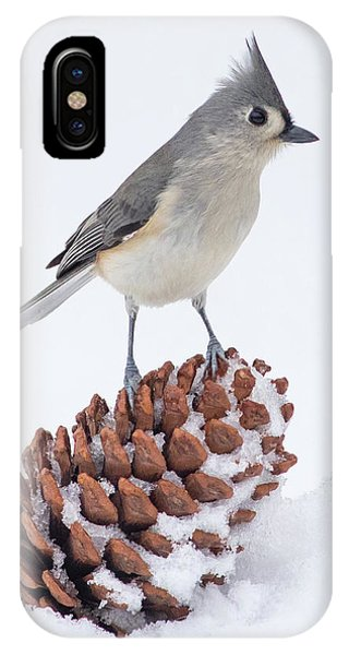 Tt On A Pine Cone IPhone Case