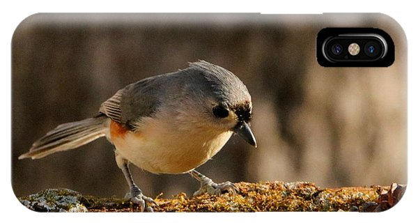 Tufted Titmouse In Fall IPhone Case