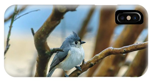 Tufted Titmouse In Tree IPhone Case