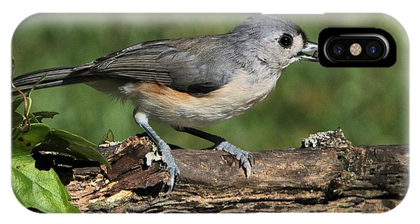 Tufted Titmouse On Tree Branch IPhone Case