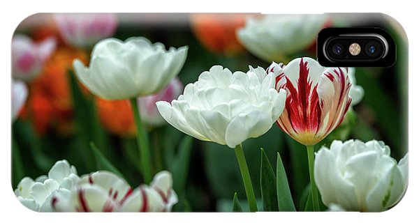 Tulip Flowers IPhone Case