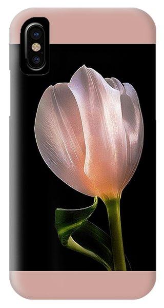 Tulip In Light IPhone Case