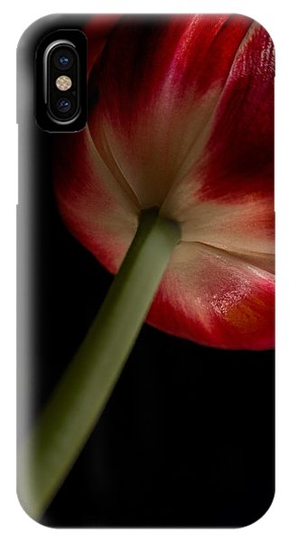 Tulip In Window Light IPhone Case