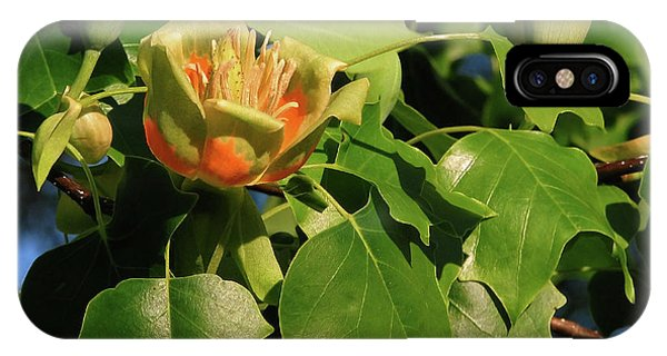Tulip Poplar IPhone Case