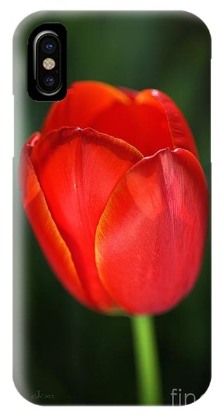 Tulip Red With A Hint Of Yellow IPhone Case