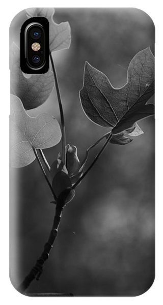 Tulip Tree Leaves In Spring IPhone Case